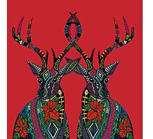 poinsettia deer red Photographic Print