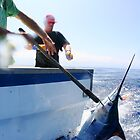 Blue Marlin Wrangling by Vince Gaeta