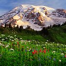 Rainier Wildflowers by Inge Johnsson