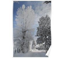 Frosty Cottonwood on Veterinary Clinic Drive Poster