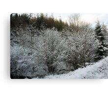 Winter Trees - Glenabo Woods, Cork, Ireland Canvas Print