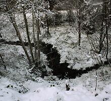 Winter Stream - Glenabo Woods, Cork, Ireland by CFoley