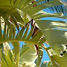 Sunshine On Palms by Ainsley Kellar Creations