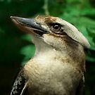 Kookaburra Portrait by Lisa G. Putman