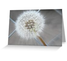 Through The Fence - Dandelion  Greeting Card