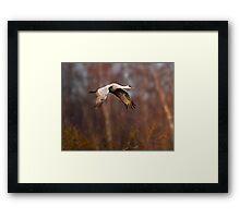 Sandhill Crane Through the Trees Framed Print