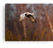 Sandhill Crane Through the Trees Canvas Print