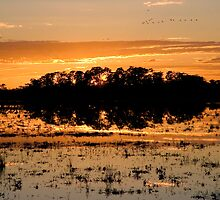 Williamtown Sun Rise - New South Wales - Australia by Andrew Brooks