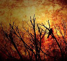 Awakening by Andrew Paranavitana