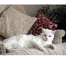 Casper reclining  Photographic Print