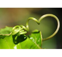From Nature with Love Photographic Print