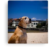 Enjoying the wind in her ears Canvas Print