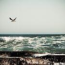 Low flying gul by Ben Breen
