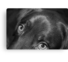 The Eyes Have It... Canvas Print