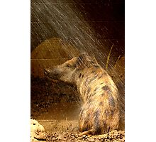 A Pigs Life Photographic Print