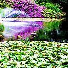 View of the pond ~ Botanic Gardens by startori