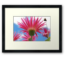 Just So Pink Framed Print