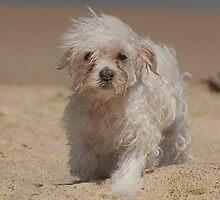 Looking a bit windswept by Rochelle Buckley