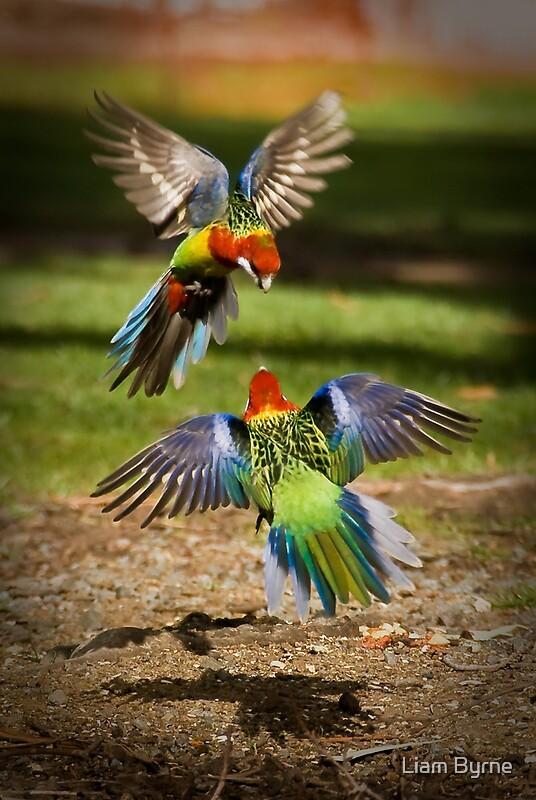 Australian Native Birds Group Redbubble