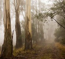 Into The Fog by Lynn and Lee Deamer