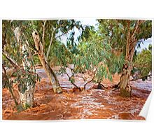 Bush Flood - Alice Springs Poster