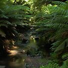 Mountain stream, Bulga Park, Strzelecki Ranges, Victoria by BronReid