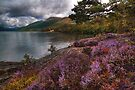 Lomond Heather by Karl Williams