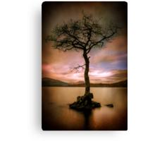 Milarrochy Tree (2) Canvas Print
