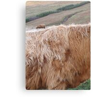 Cattle on Cattle Canvas Print