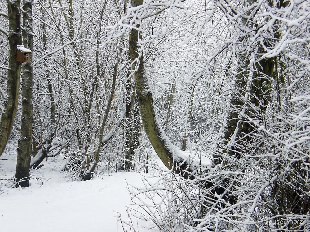 winter wonderland by Joyce Knorz