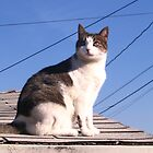 Cat on a hot tin roof by justcruzin