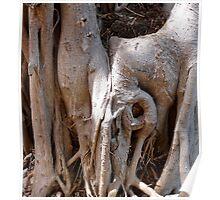 Tree Femininity Poster