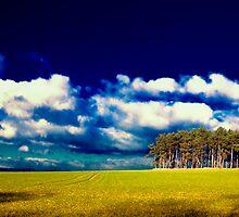 Trees in Summer by Tom Prokop