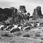 Navajo Churro Sheep by Susan Chandler