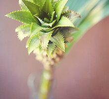 The secret life of pineapples by kellymacphoto
