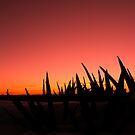yucca sunset by LizzieMorrison
