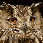 Eagle owl by John Ellis