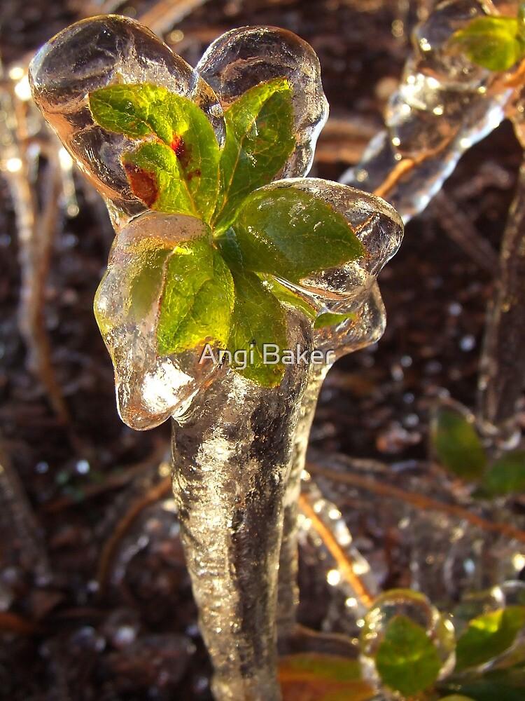 Winter Wonderland 11 by Angi Baker