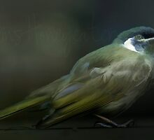 Honeyeater by Murray Swift