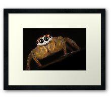 Garden Jumping Spider Framed Print