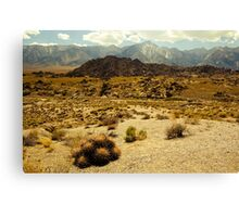 Barrel Cactus, Alabama Hills Canvas Print