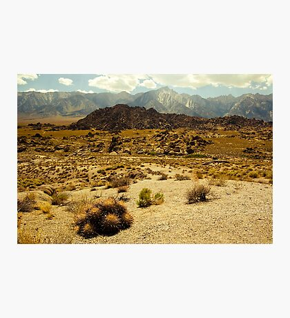 Barrel Cactus, Alabama Hills Photographic Print