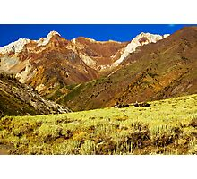 Pack Train, McGee Canyon Photographic Print