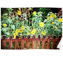 sunflower garden Poster