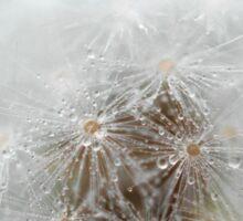 Misty dandelion Sticker
