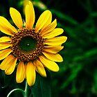 sunflower by Juilee  Pryor