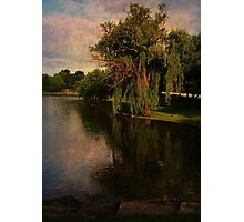 The Willow Photographic Print