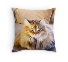 Maine Coon sitting pretty Throw Pillow