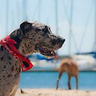 Daisy at the Beach by Ben Breen