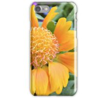 Gaillardia 'Oranges and Lemons' iPhone Case/Skin